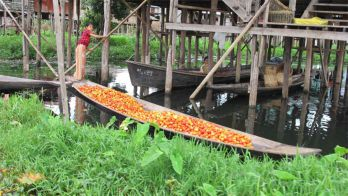 TAG 11 : INLE SEE